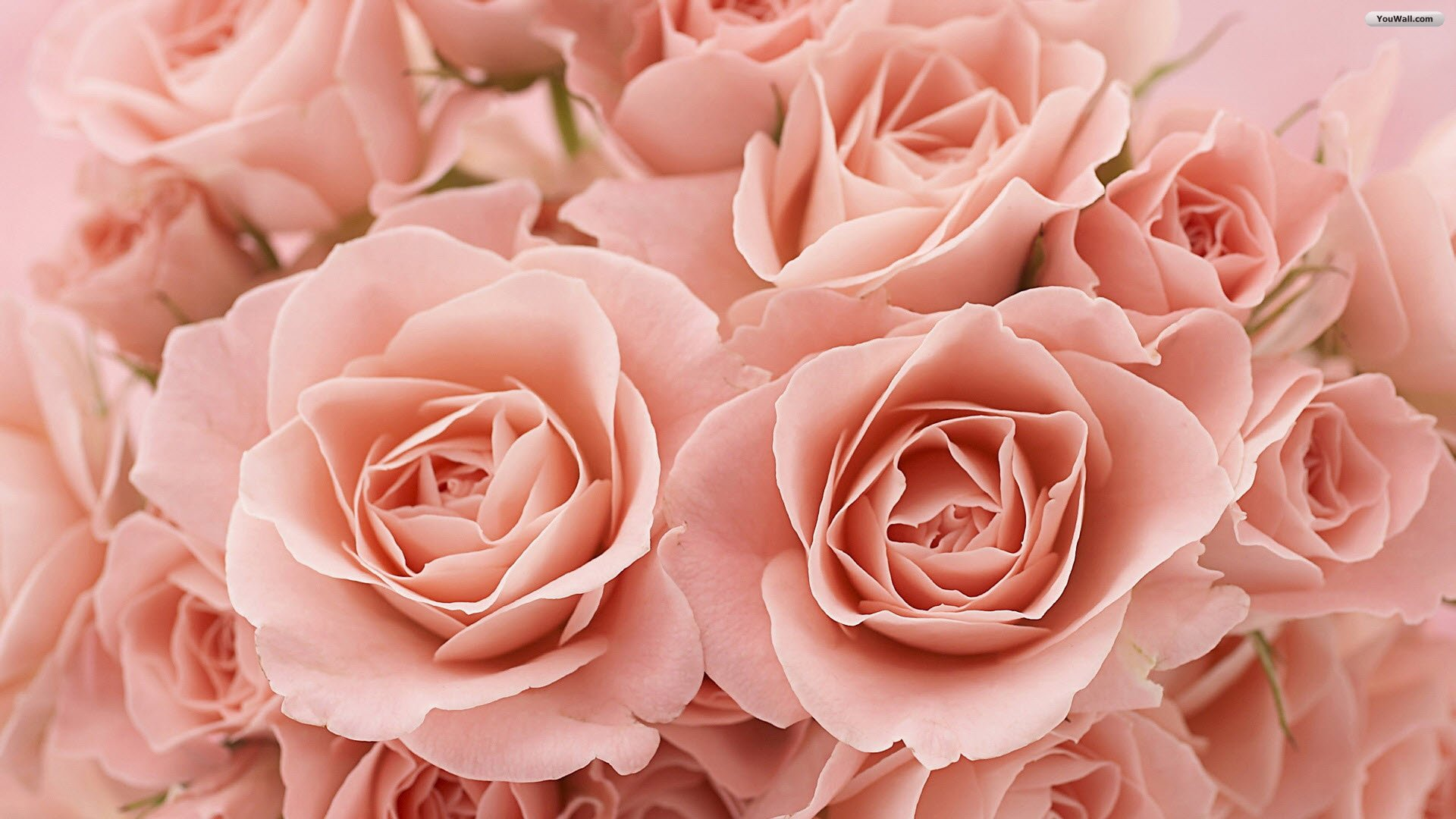 Pink Roses Tumblr Background Wallpaper 3