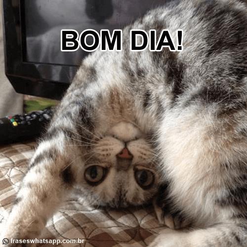 bom-dia-engracado-gato