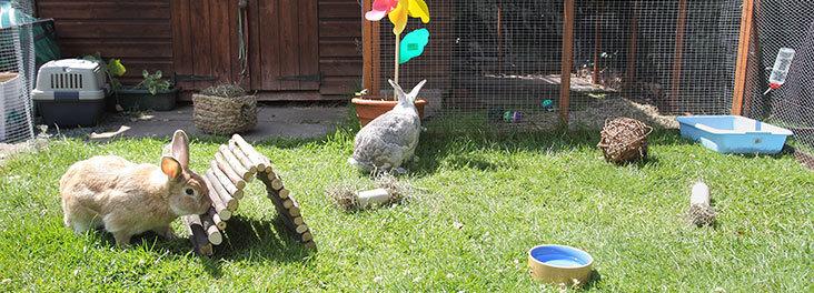 RabbitEnvironment