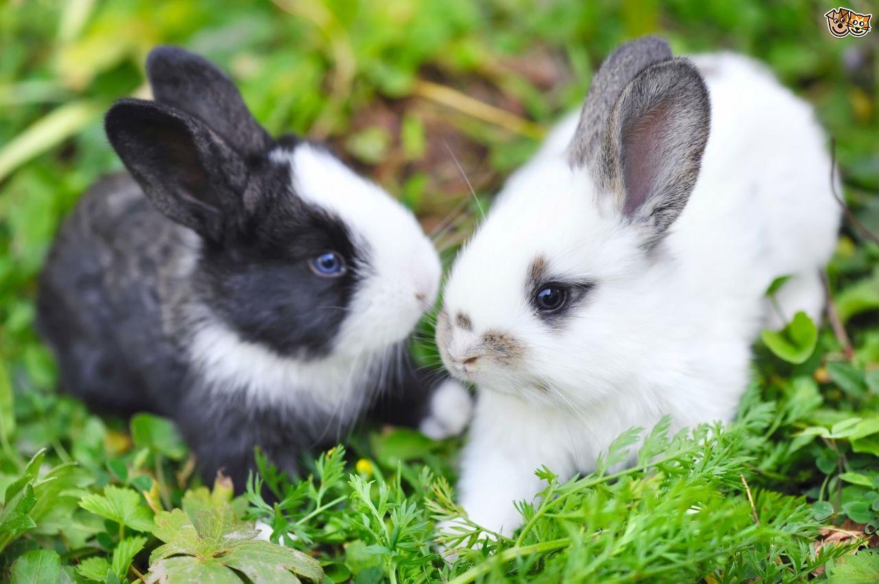 different-methods-of-rabbit-communication-53e3a55ac0e98