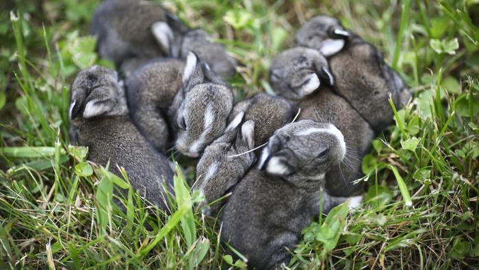 long-rabbits-stay-pregnant_698b5ab6e7f309ff