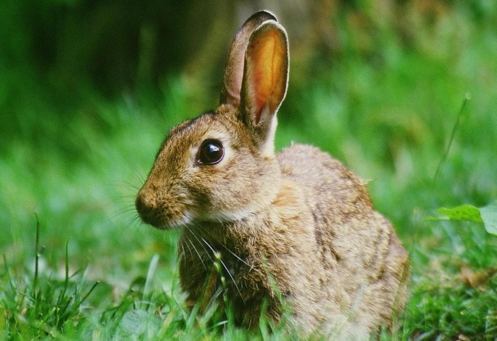 rabbit-e1403800396624