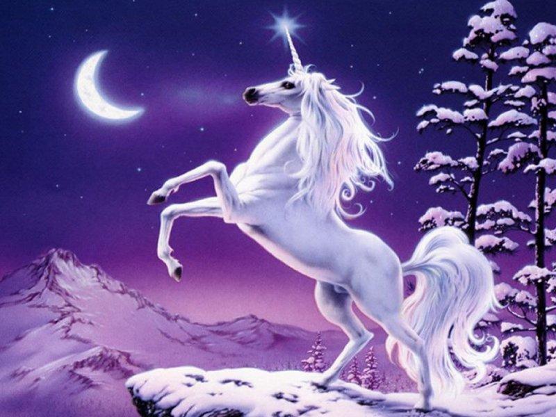 1419618-unicorn2