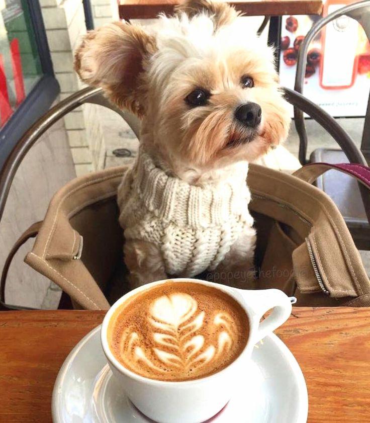 fad1ab02b7dbda1b0cca4b3ee4ab4660--terrier-yorkshire-yorkshire-terrier-haircut