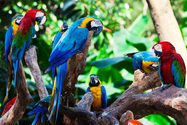 BRA_Amazonia
