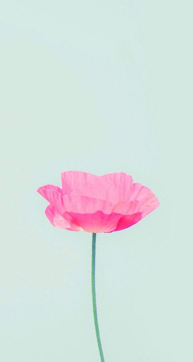 141177478f2212c375fb04093827a30a--flower-phone-wallpaper-flowers-wallpaper