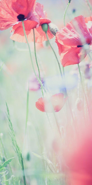 b90f7a6ed6a933e51d423fe487c6c8a2--flower-phone-wallpaper-pastel-iphone-wallpaper