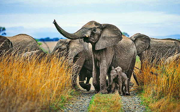 1-slide-botswana-south-africa-victoria-falls-elephant-med