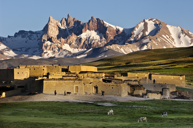 AFGHN-12819, Qala-e-Sabzi, Afghanistan, 2007. Donkeys grazing in fields.