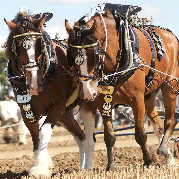 100 Fotos De Cavalos Lindos De Raça E Mais